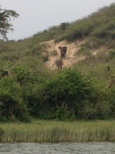 Elephants coming down the hill