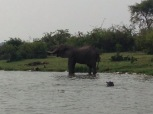 Elephant hanging out at the water with a Hippo
