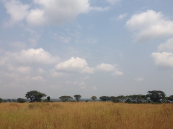 The landscape of the savannah- the big tree on the left has 6 lions in there.
