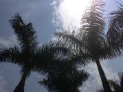 Sunny day...