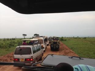 Lion traffic jam