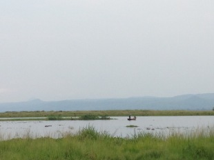 Hippos in the foreground with fisherman