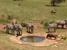 watering hole at the lodge