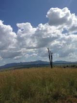 Big Sky, Brown Grass